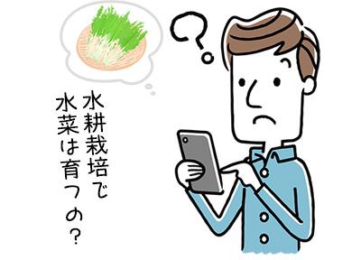 水菜が水耕栽培できるって本当?