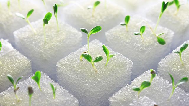 水菜を水耕栽培する方法とは?