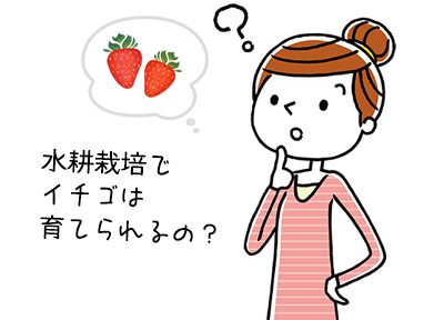 イチゴの水耕栽培は室内でどうやるの?